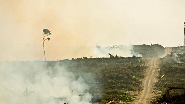 deforestacion-plantaciones-palma-rainforest_ediima20170403_0689_4