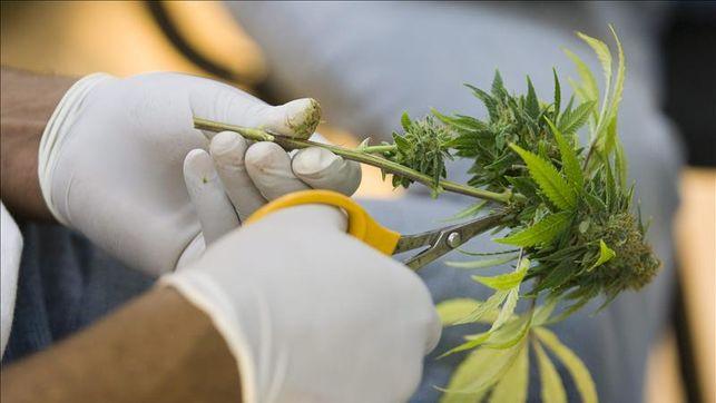 aprueban-marihuana-fines-medicos-australia_ediima20141221_0046_27